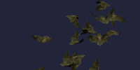 A Bat Colony