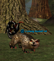 A young mystail rat