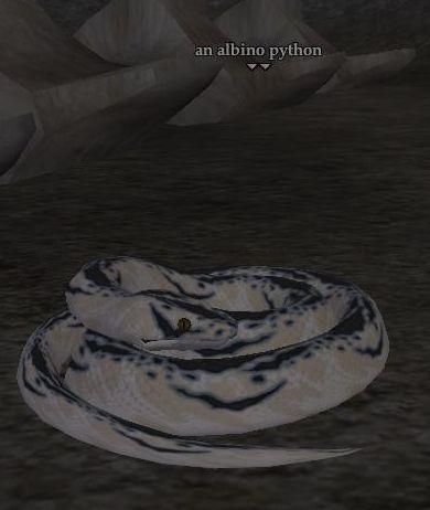 File:Albino python.jpg