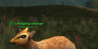 A fledgling antelope