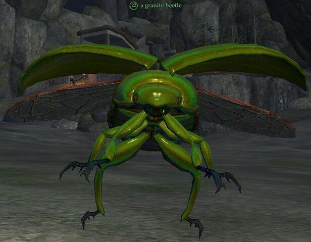 File:Granite beetle.jpg