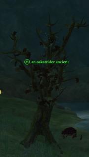 An oakstrider ancient