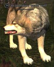 An immature weald wolf