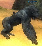 A bush gorilla