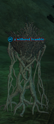 A withered bramble