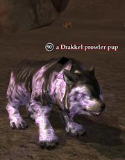 A Drakkel prowler pup
