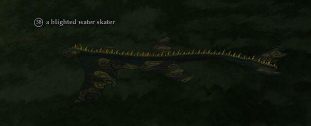 File:A blighted water skater.jpg