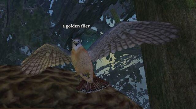 File:A golden flier.jpg