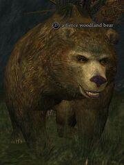 Fierce woodland bear