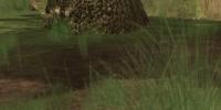 A timber fawn