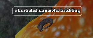 File:A frustrated shrumbler hatchling.jpg