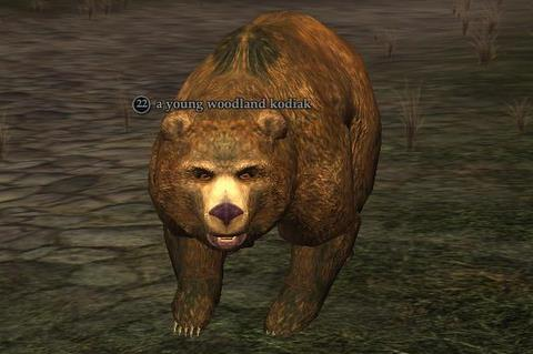 File:Young woodland kodiak.jpg