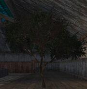 Savannah tree (Visible)