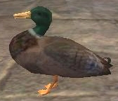 A duck (East Freeport)