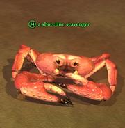 A shoreline scavenger