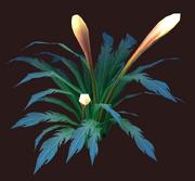 Small Zavith'loa Glowflower (Visible)