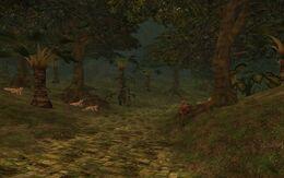The Jungle of Alliz Evol