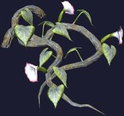 Wild trumpetflower vine (Visible)