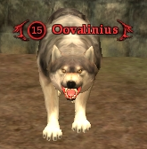 File:Oovalinius.png