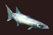 A tiny barracuda plushie (Visible)