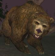 Race bear