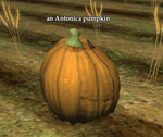 An antonica pumpkin