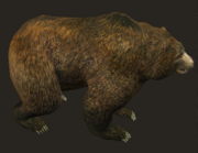 Grizzly Bear Placed