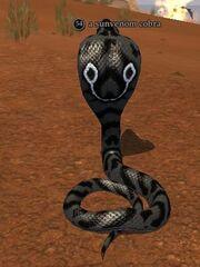 A sunvenom cobra
