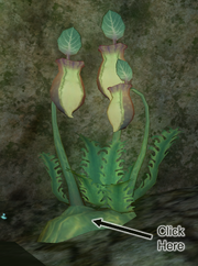 A pitcher plant (Enchanted Naiad Grotto)