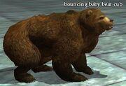 Bouncing baby bear cub