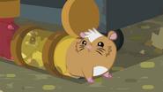 Hamster looking around EG2
