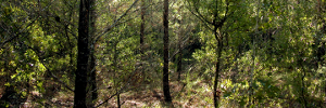File:Forest panorama(2).png