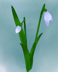 File:4 snowdrops.png