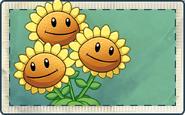 Triplet Sunflower Seed Packet
