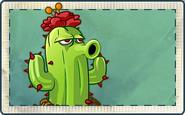 Cactus Seed Packet