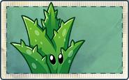 Aloe Vera Seed Packet