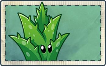 File:Aloe Vera Seed Packet.png