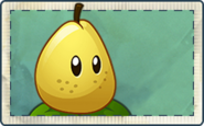 Pear Seed Packet