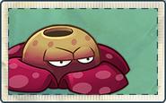 Rafflesia Seed Packet