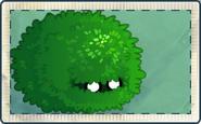 Small Bush Seed Packet