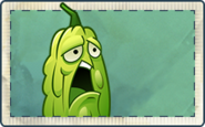 Bittermelon Seed Packet