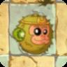Kiwifruit2