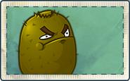 Kiwi Seed Packet