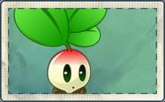 Small Radish Seed Packet