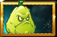 Squash New Premium Seed Packet