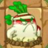 Turnip2