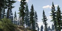 Bosque de Paleto