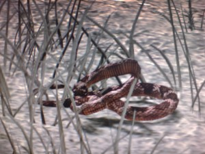 Archivo:Serpiente.jpg