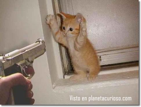 Archivo:Gatos-graciosos-con-pistolas-809742-1-.jpg