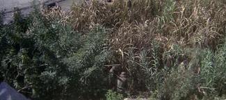80th Vice. Desaparecida en Vietnam. 2ª parte Hierba III
